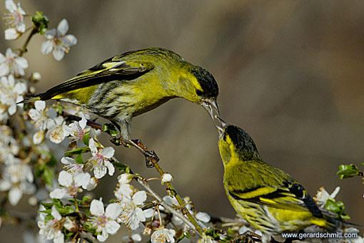 Les oiseaux du bord de mer for Oiseaux du sud de la france